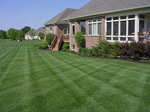 perfect-lawn_edited.jpg