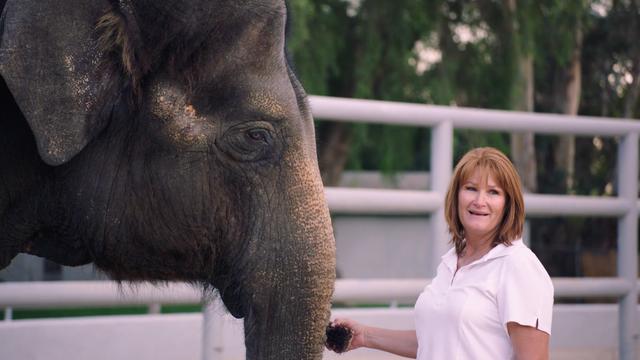 "Hill Country Elephant Preserve ""Elephant Ambassadors"""