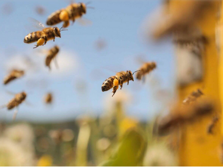 Concerns of a new beekeeper