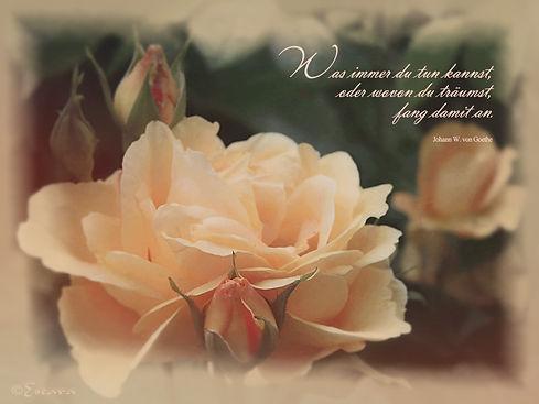 1702_Rose_5784_vignette.jpg