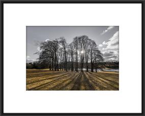 Bladon Trees I £95