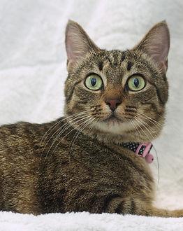 Gem a=cat1.jpg