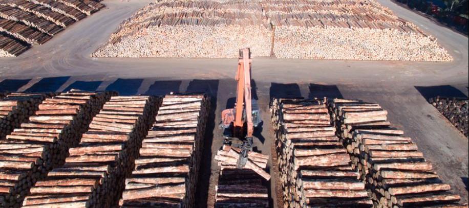 100% Asphalt Log Yard
