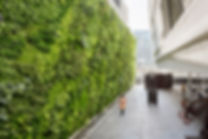 Living Wall2.jpg