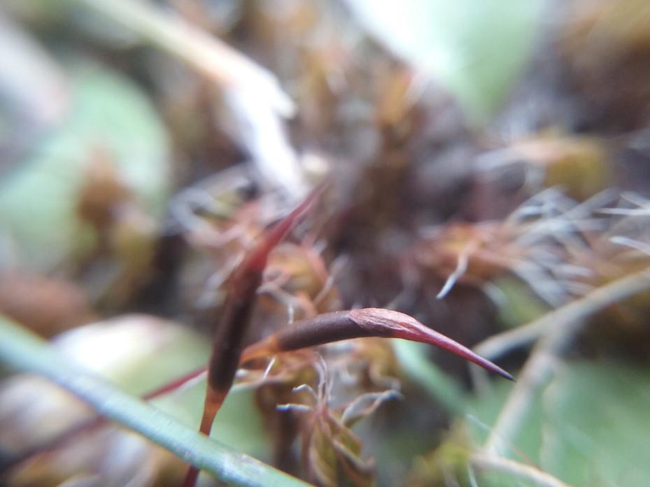 Moss Heads