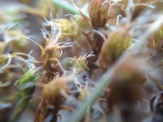 Moss 2 M BI M7.jpg