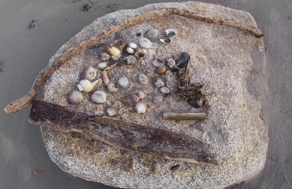 Shell Art, Dry Rock