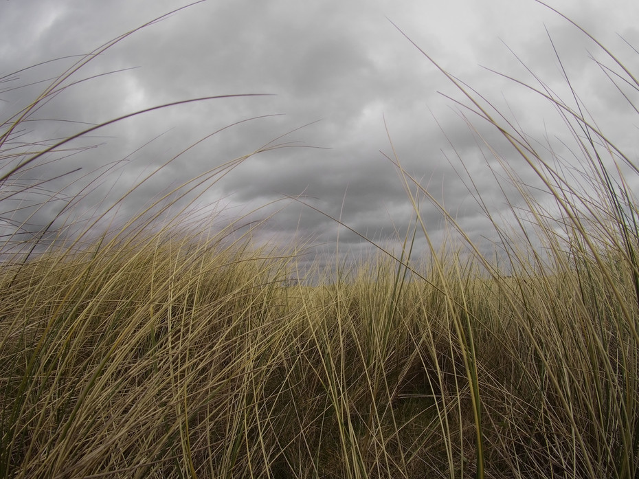 Marram Grass, Curve