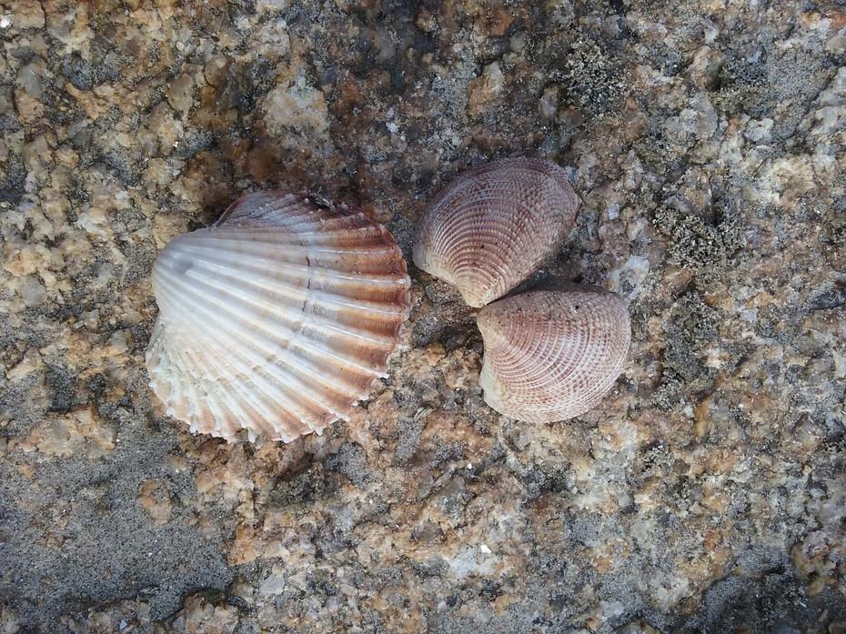 Rough - Shells