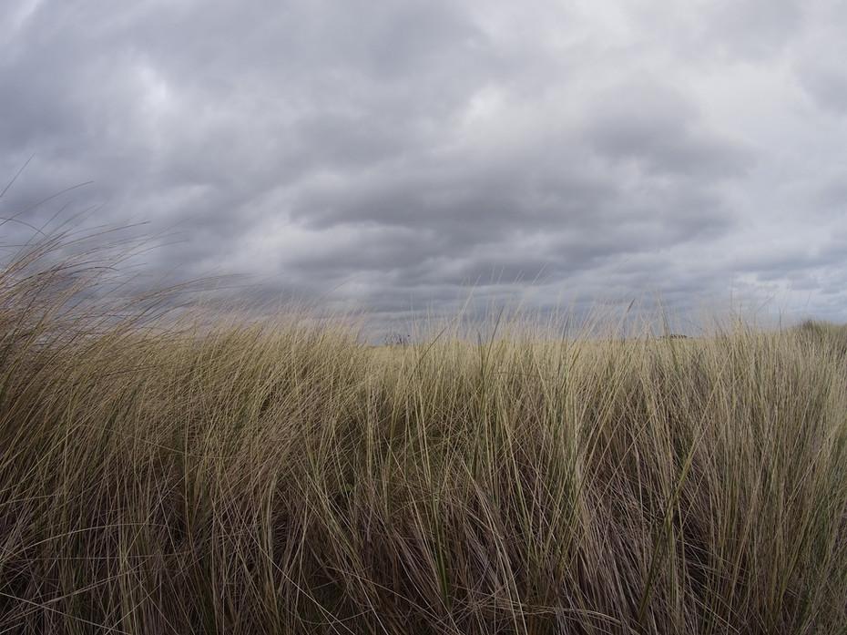 Marram Grass, Clouds