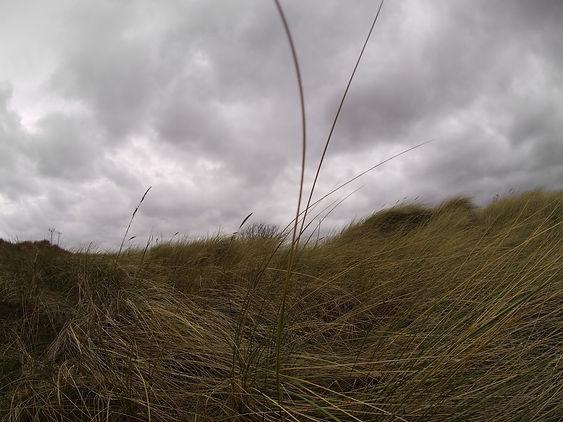 Marram grass 25 BI M7.JPG