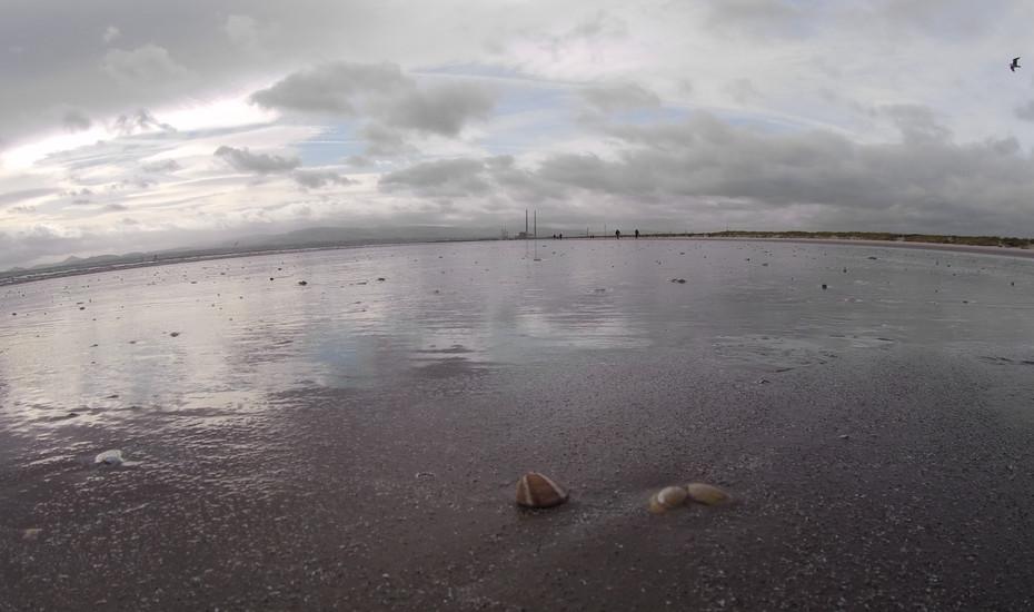 Blue Sand Shells
