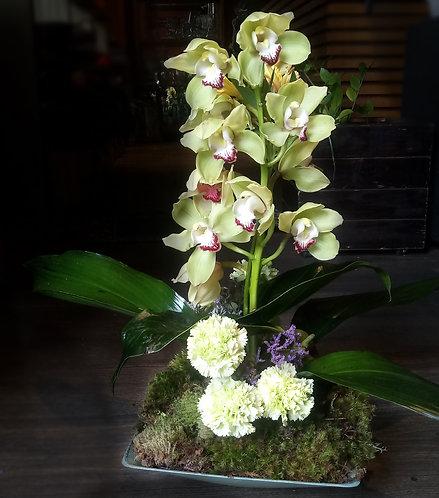 Orquídea de Inverno