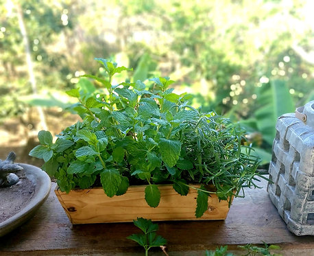 Jardineira com Cheiro Verde ou Ervas Aromáticas