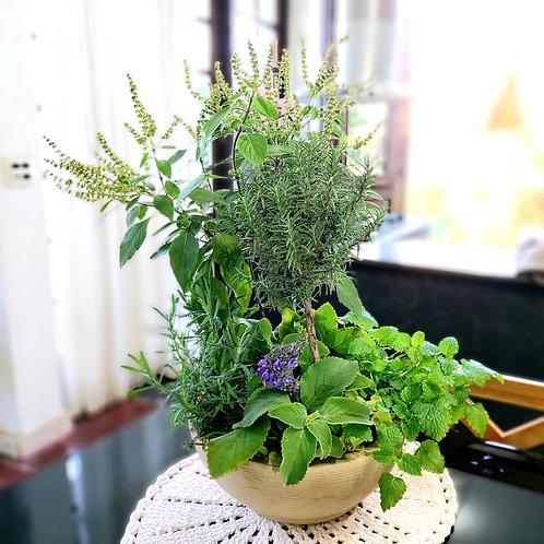 Mini Canteiro com Ervas Aromáticas e ou Cheiro Verde
