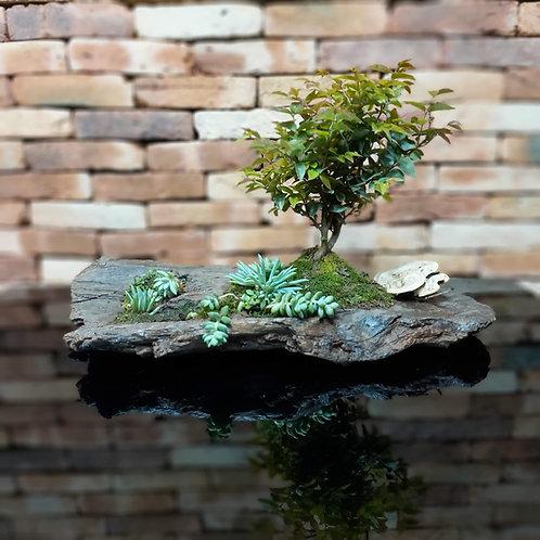Bosque Bonsai Jabuticaba 10 anos com suculentas