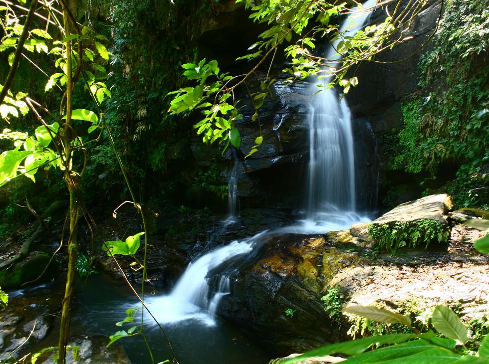 Tijuca Forest RJ_