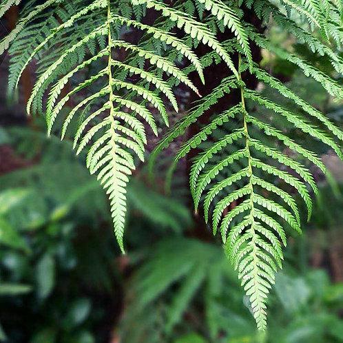 Greens fern leaves leaf photo greeting card