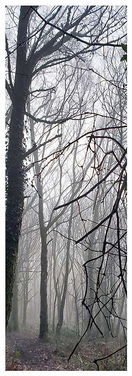 Moor time misty woods trees silhouette photo greeting card