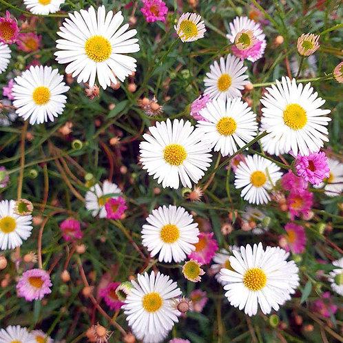Blooming beautiful flowers daisies photo greeting card