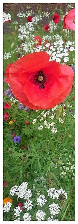 Blooming time blush lest we forget poppies photo greeting card