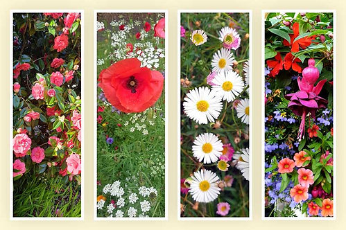 Blooming time blush flowers camelia cluster poppies poppy lest we forget daisy delight floral glory photo greeting card