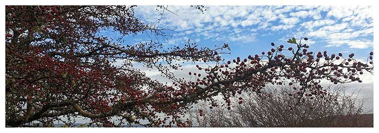 Dream time skies berries under a blue sky photo greeting card