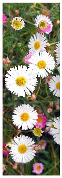 Blooming time blush daisy delight flowers photo greeting card