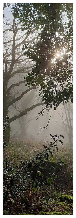 Moor time magic holly in the mist tree silhouette sun photo greeting card