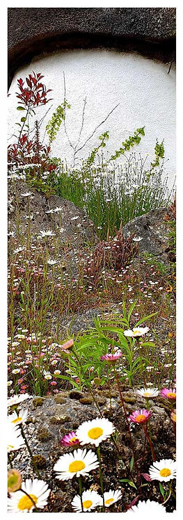 Blooming time medley daisies rock rockery photo greeting card