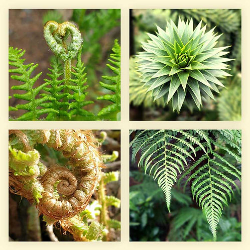 Green fern heart frond curls succulent leaves photo greeting cards