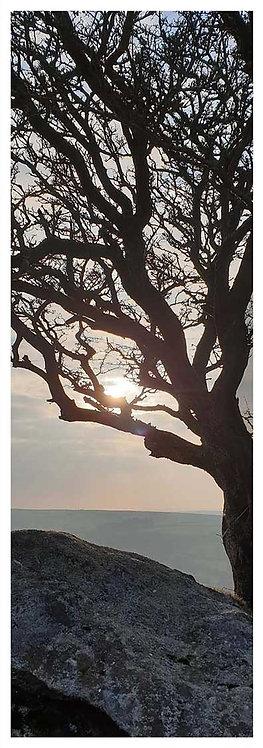 Moor time magic granite tree sun silhouette photo greeting card