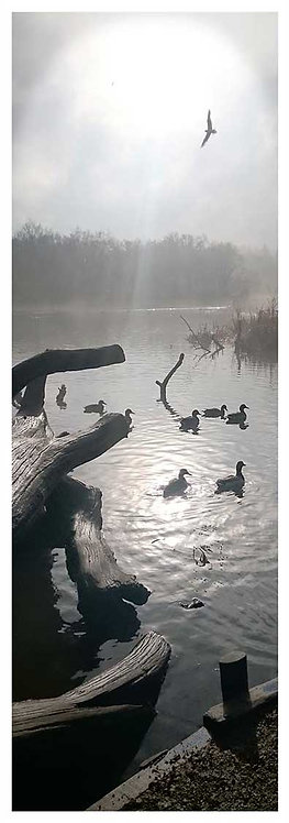 Moor time moods love a duck mist lake photo greeting card
