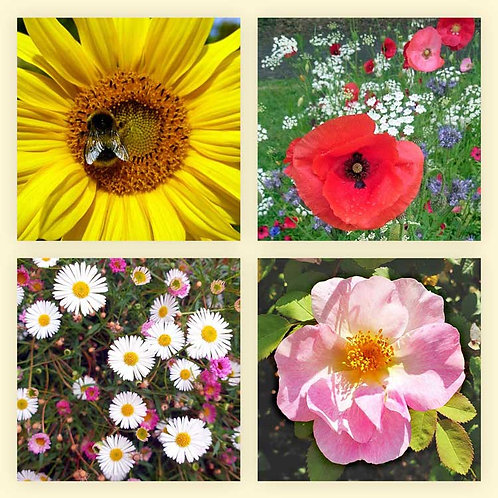 Blooming beautiful flowers bee a sunflower poppies daisies briar rose photo greeting card