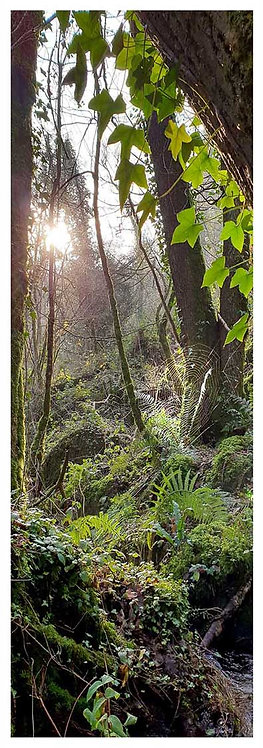 Moor time magic cobweb trees woods ivy photo greeting card