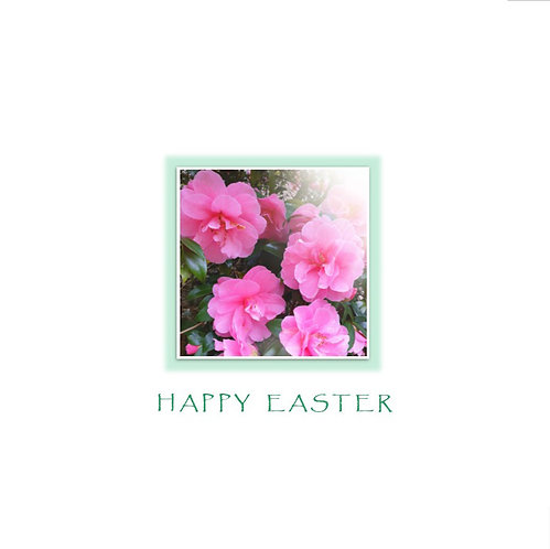 Easter Camellia