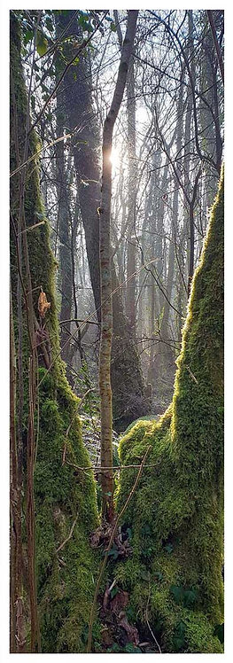 Moor time secrets ancient woods trees mist photo greeting card