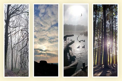 Moor time moods misty woods sunset silhouette ducks tall trees long shadows photo greeting card