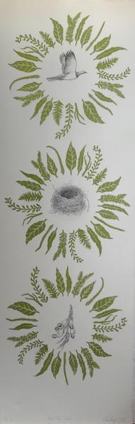 'Bird - Tree - Seed'