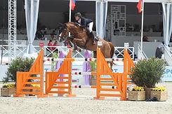 paard-cacacha-knokke.jpg