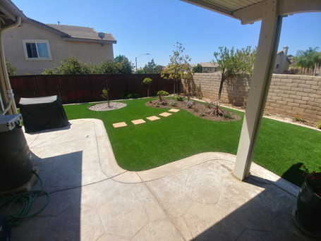 Backyard turf.JPG