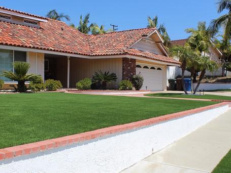 close-up lawn turf.JPG