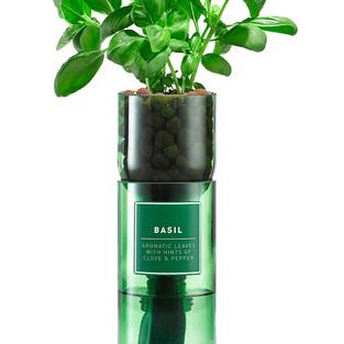 Hydro Herbs Sorten Basilikum, Minze u. Koriander