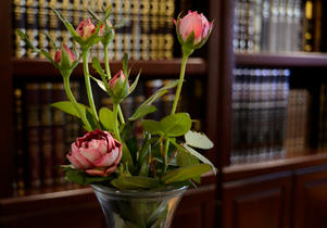Rose buds in front of sefarim shelves