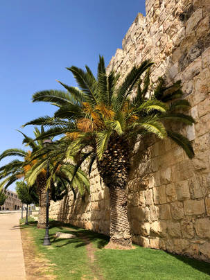 Palm trees along a stone wall in Israel