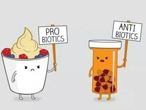 Probiotics vs Antibiotics