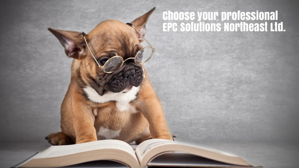 dog wearing glasses choose your professional EPC Solutions Northeast Ltd.