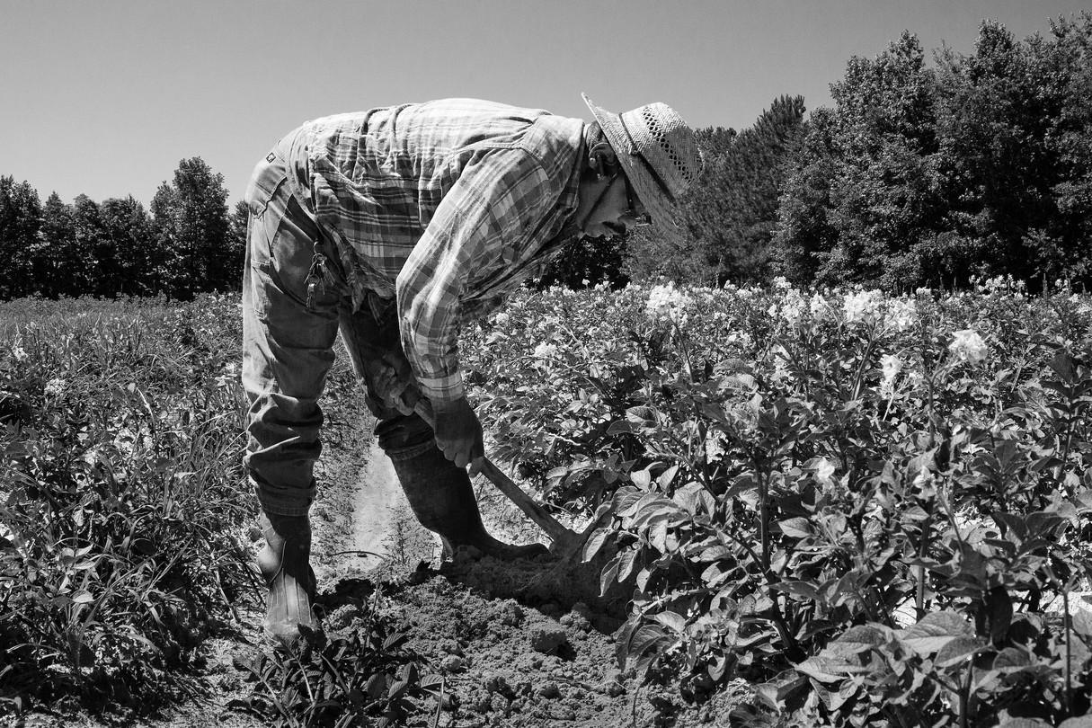 Herb Sr., Tending Crops