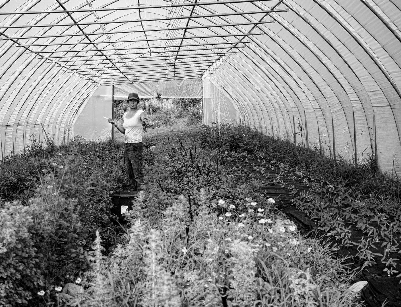 Damaris Tending Herbs