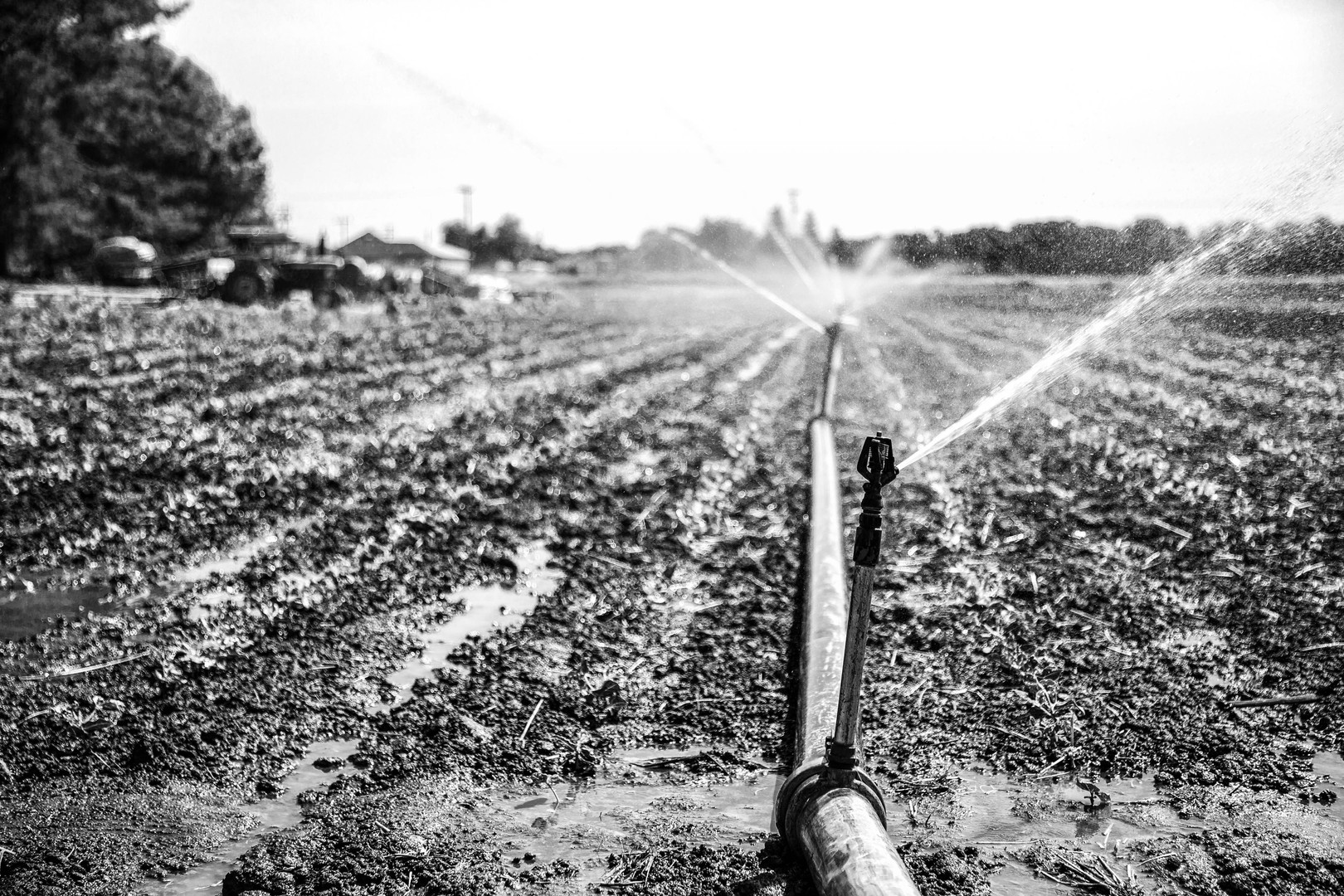 Morning Irrigation